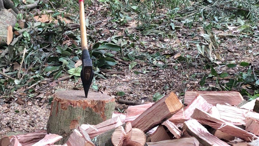 斧で割るマテバシイの薪を割っている途中の画像